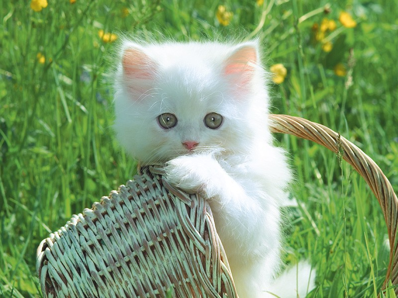 La preghiera del gatto...ti dimostrerò in carezze e